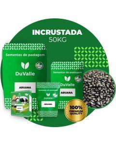 SEMENTE INCRUSTADA DE CAPIM ARUANA - 50KG